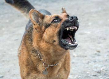 Pies rzucił się na kobietę. Policja szuka właściciela czworonoga i świadków