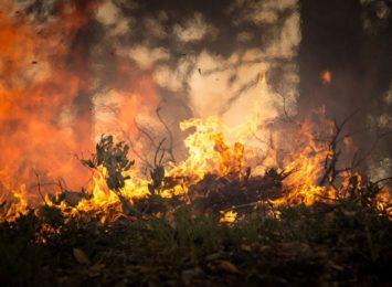 Dziś (26.08.) rocznica wielkiego pożaru w Kuźni Raciborskiej. Zginęli w nim strażacy