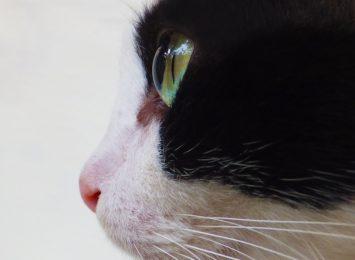 Co się dzieje w Gołkowicach? Kolejny kot okaleczony