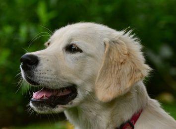 Dowiedz się jak pies postrzega świat. Spotkanie z Wojciechem Cesarzem w Jastrzębiu