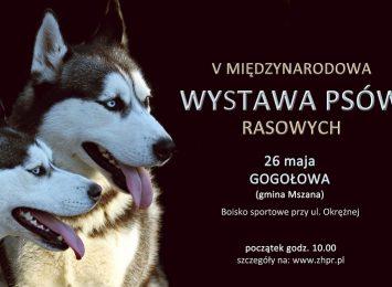 Wystawa psów w Gogołowej