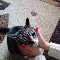 Kociak słuchaczki Karoliny