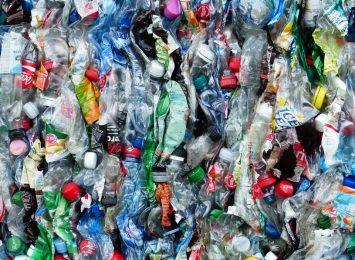 Poćwicz segregację śmieci, korzystając z rad ekspertów