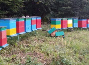 Niszczą i kradną. Co? Ule z pszczołami!
