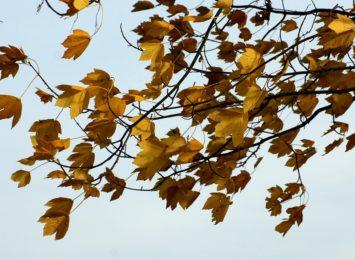 Drzewo przewrócone na Żelaznym Szlaku Rowerowym. Po mocnym wietrze interwencja też w Rybniku