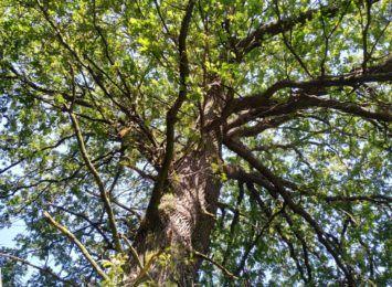 Mieszkańcy alarmują o wycince lasu na granicy Rybnika i Żor. Nadleśnictwo uspokaja