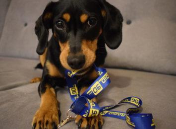 Dzień Kundelka: Obalamy mity dotyczące psów