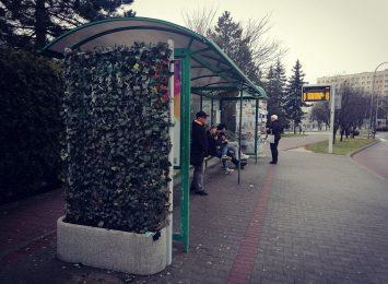 Zielone przystanki w Jastrzębiu