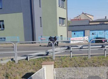 Policyjna interwencja na ulicy Wodzisławskiej w Rybniku