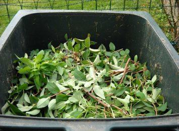 Żory: Odpady zielone zostaną odebrane