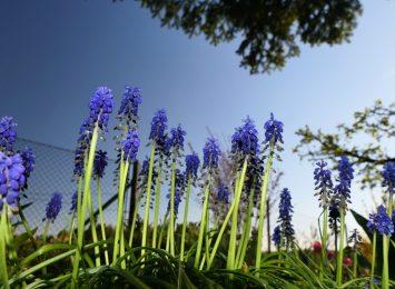 #Zostańwdomu i zajmij się ogrodem