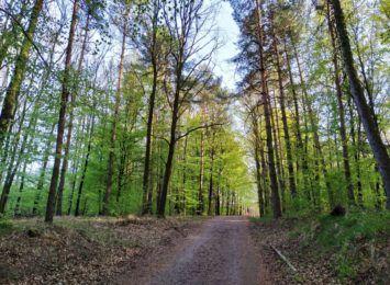 Dzień Pozytywnych Wiadomości w Radiu 90: Spacer po lesie w pierwszym dniu wiosny