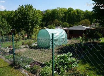 Kradzieże na terenach ogródków działkowych, złodzieje kradną wszystko