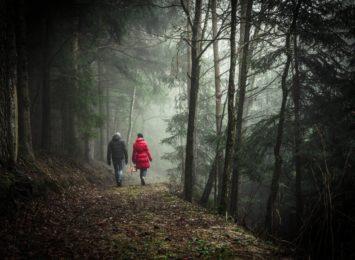 Program małej retencji ma zatrzymać wodę w lasach