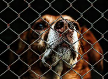 Wesprzyj bezdomne zwierzaki. Wodzisławskie przytulisko czeka na karmę