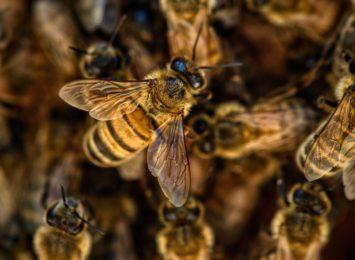 ''Pszczoły'' Piotra Sochy. Biblioteka w Rybniku zaprasza na wystawę