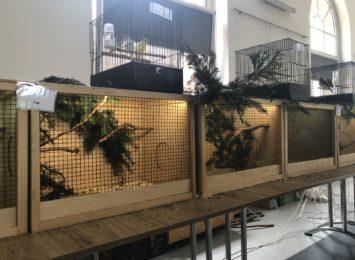 Wystawa ptaków egzotycznych i zwierząt domowych na Ignacym [LIVE]