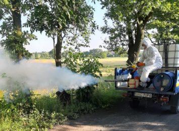 Odkomarzanie w Krzyżanowicach. Akcja w tym tygodniu