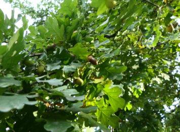 Jak mają wyglądać nowe nasadzenia drzew? Konsultacje w sprawie dzielnicy Zawada
