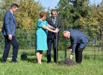 Nowe drzewa przy szkołach ponadpodstawowych w Wodzisławiu Śląskim [WIDEO]