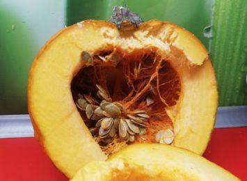 Pomarańczowo, smacznie i zdrowo. Dynia w kuchni Radia 90