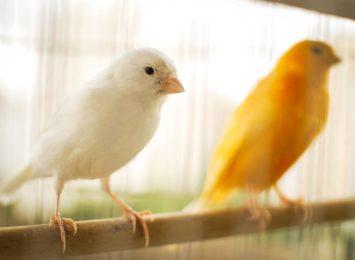 Wystawa ptaków egzotycznych w Niewiadomiu odwołana