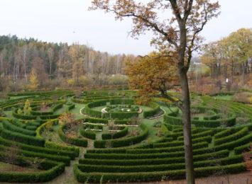 Chryzantemy także w Arboretum Bramy Morawskiej w Raciborzu [FOTO]