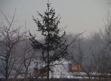 Smog nadal utrzymuje w części regionu. Najgorsza sytuacja jest w Rydułtowach, Rogowie i Syryni