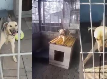 Pies Marfi ze Schroniska dla zwierząt w Rybniku ma padaczkę. Pilnie potrzebuje domu!