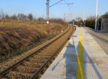 Czy trzeba wycinać drzewa, by rewitalizować linię kolejową? [FOTO]