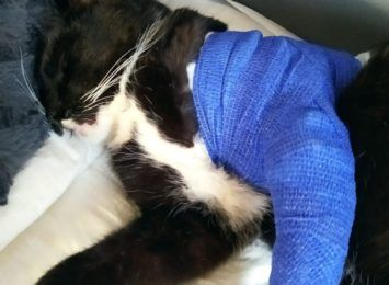 Słuchacz Radia 90 informuje o napaściach na zwierzęta. Pomocy weterynarza potrzebuje kot skrzywdzony w Gołkowicach