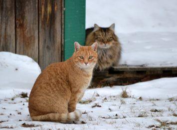 Apel w sprawie kotów. Ty też możesz pomóc!