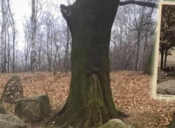 Archeolodzy zbadają Górę Wisielczą na terenie Wodzisławia Śląskiego
