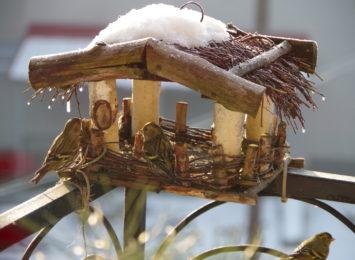 Warto dokarmiać ptaki zimą. Odwdzięczą się!