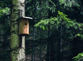 OSP Mszana przygotowała budki dla ptaków. Strażacy zawiesili je w Parku Aktywnej Rekreacji