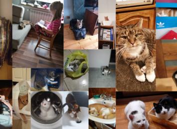 """Kotki, """"kiteki"""", """"koteły"""". Zasypaliście nas zdjęciami swoich zwierzęcych przyjaciół [FOTO]"""