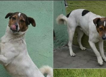 Pies Straszek z Radlina odnalazł się w Karwinie. To historia z happy endem