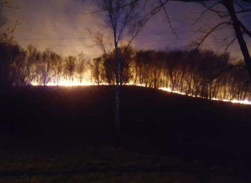 Cztery hektary nieużytków spłonęły na granicy Rybnika i Radlina