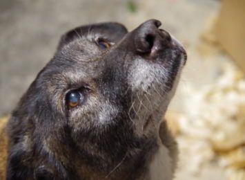 Dzień Pozytywnych Wiadomości w Radiu 90: 80% psów, jakie trafiają do schroniska, wraca do swoich domów