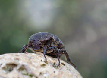 Butelka pozostawiona w lesie to śmiertelna pułapka dla chrząszczy