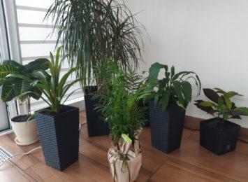 ''Chcemy zaadoptować rośliny''. Przynieś kwiatek do Oazy Aktywności w Wodzisławiu