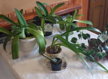 Schronisko dla niechcianych roślin. Wiecie, że działa w Jejkowicach?