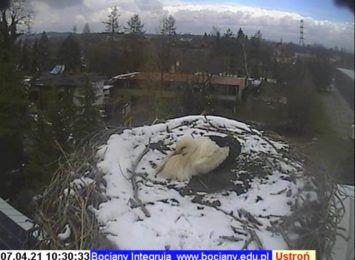 Jest bocian w gnieździe w Ustroniu. Chyba mu trochę zimno!