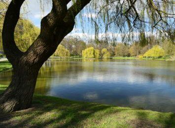 Nowe źródełko w Parku Roth w Raciborzu