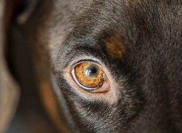 Jak udzielić pierwszej pomocy zwierzęciu? Tych kilka czynności może uratować życie