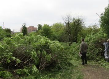 Wycinają drzewa w Radlinie. Muszą zrobić miejsce na plac zabaw dla powstającego żłobka