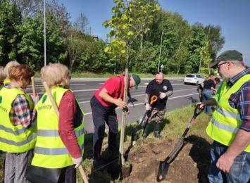 Przybyło drzew przy ulicy Rudzkiej w Rybniku