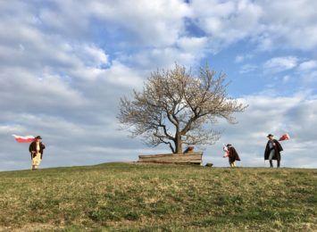 Czy drzewem roku zostanie okaz z Wisły?