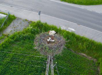 Są już pisklęta w bocianich gniazdach na słupach energetycznych