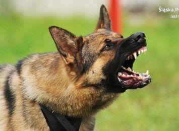 Jastrzębie-Zdrój: Nadal szukają świadków pobicia i pogryzienia przez psa